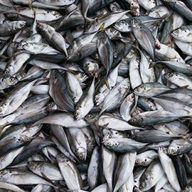 Alaska Air Cargo Serves The Fishing Industry